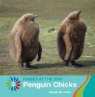 Penguin Chicks Cover Image
