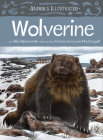 Animals Illustrated: Wolverine Cover Image