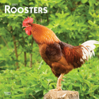 Roosters 2021 Square Cover Image