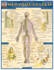 Nervous System Laminate Reference Chart Cover Image