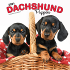 Dachshund Puppies 2021 Square Cover Image