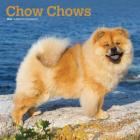Chow Chows 2020 Square Cover Image